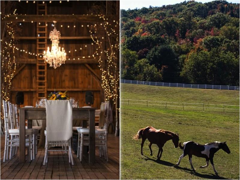 Farm Wedding - room shot and horses.jpg