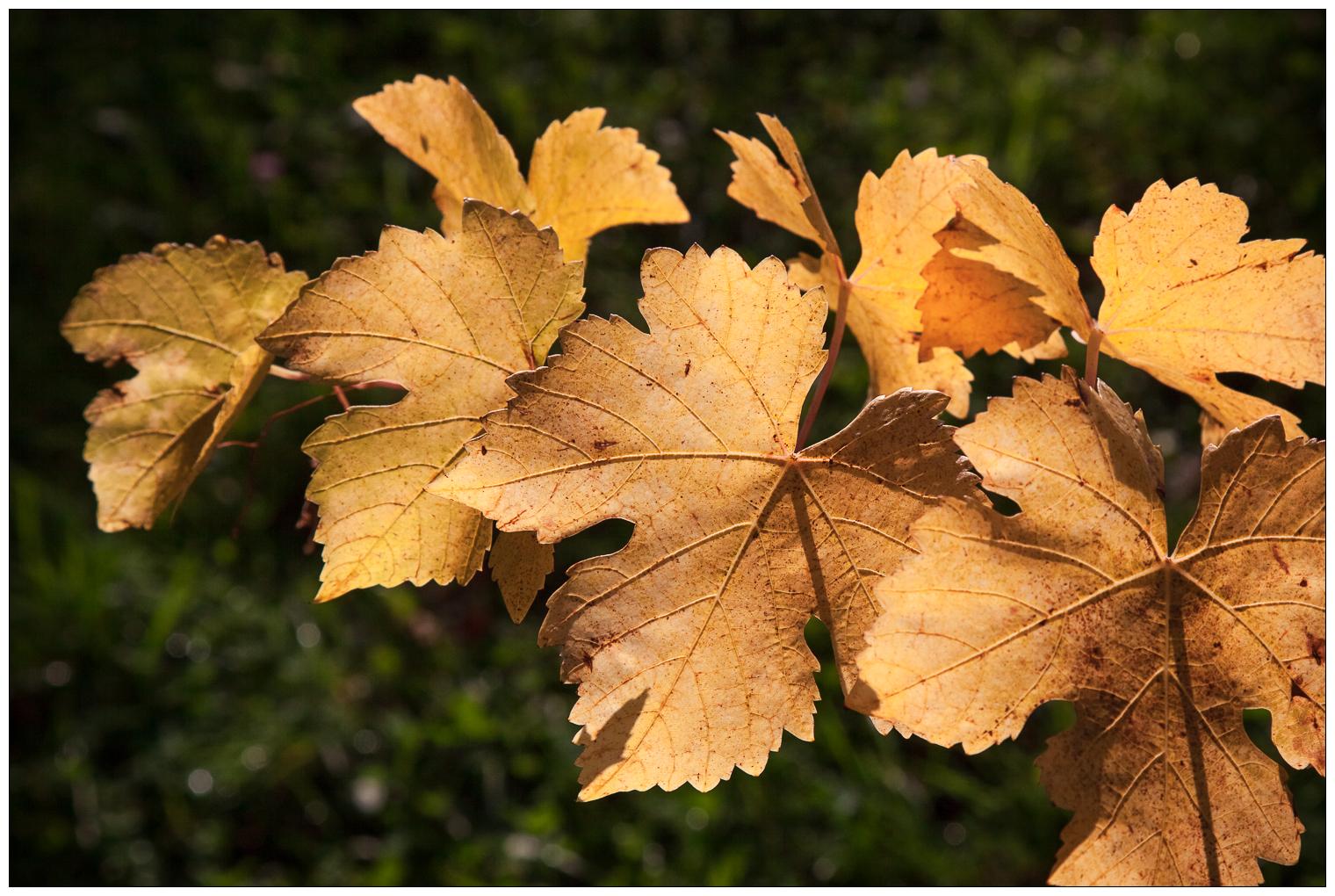 ©guillaumeperret.com-0121.jpg