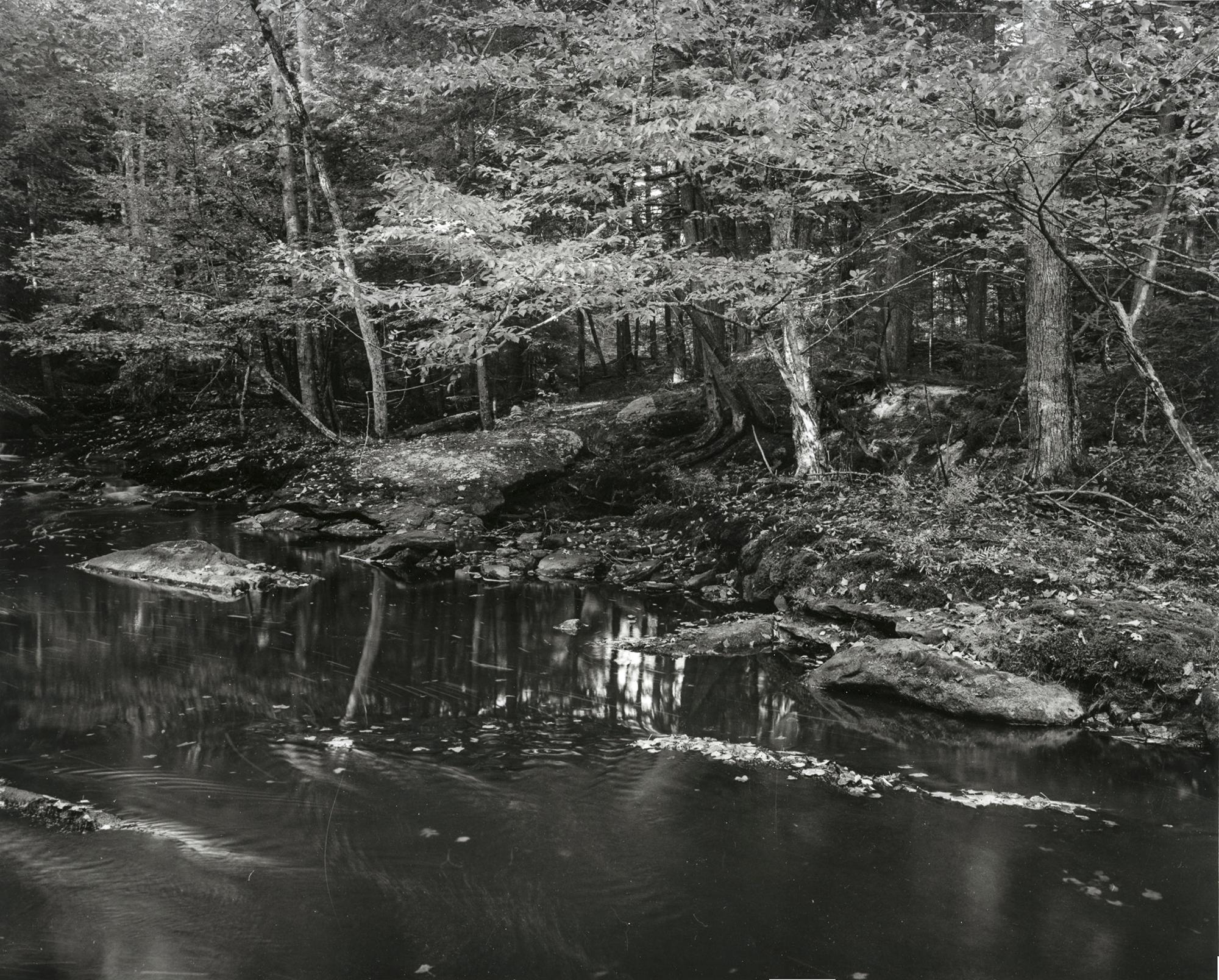 Cathance River Preserve, Topsham Maine
