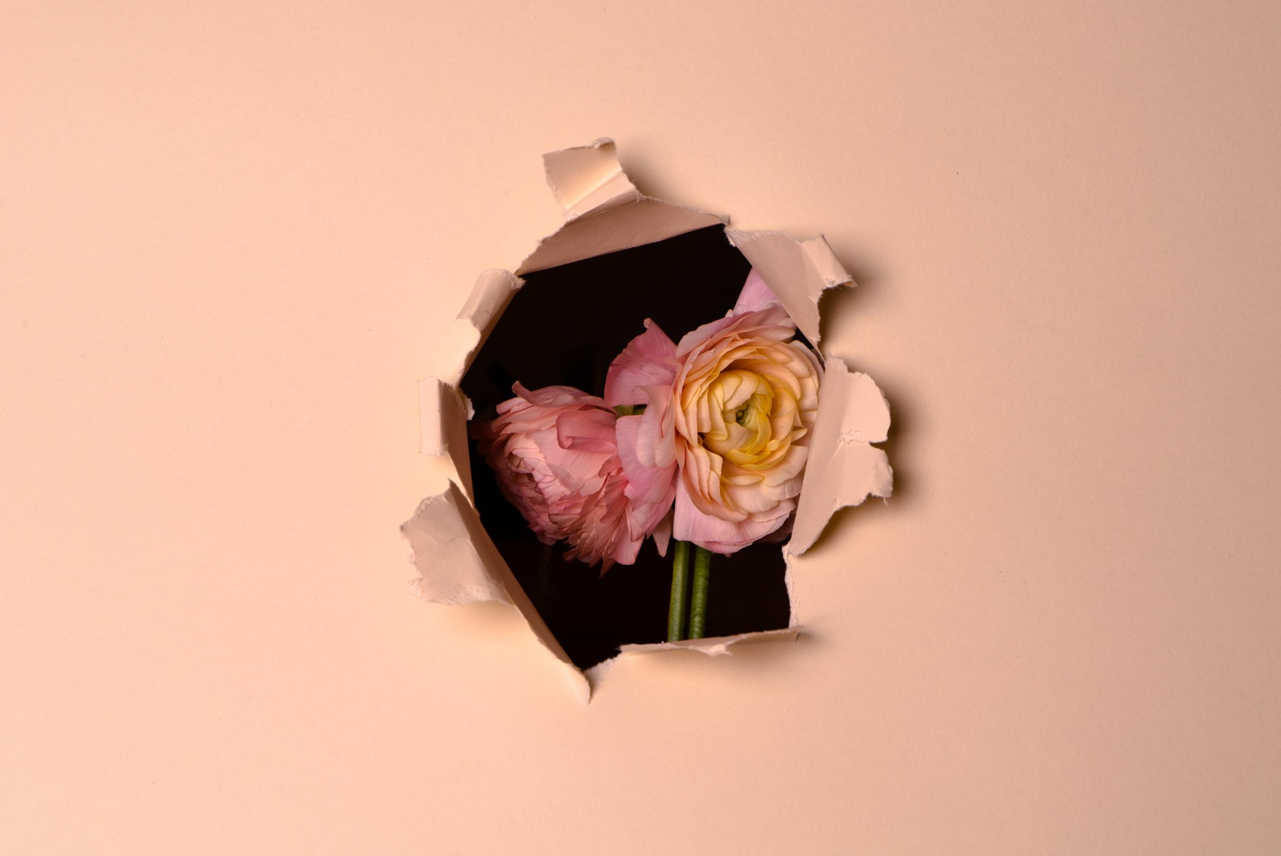 vasili-gavre-flowersbehind01.png