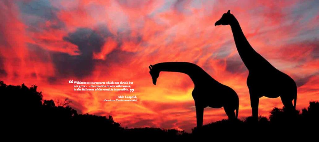 low res giraffe.png