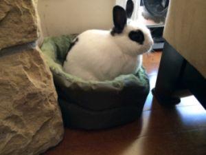 Valentino appreciates the warm comfortof his round fleece bed.