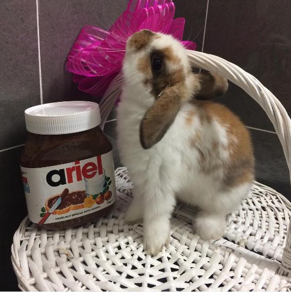 rosie.sweet.bunnie.png