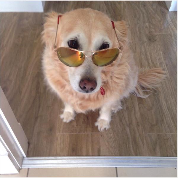 sasha_the.dog.png