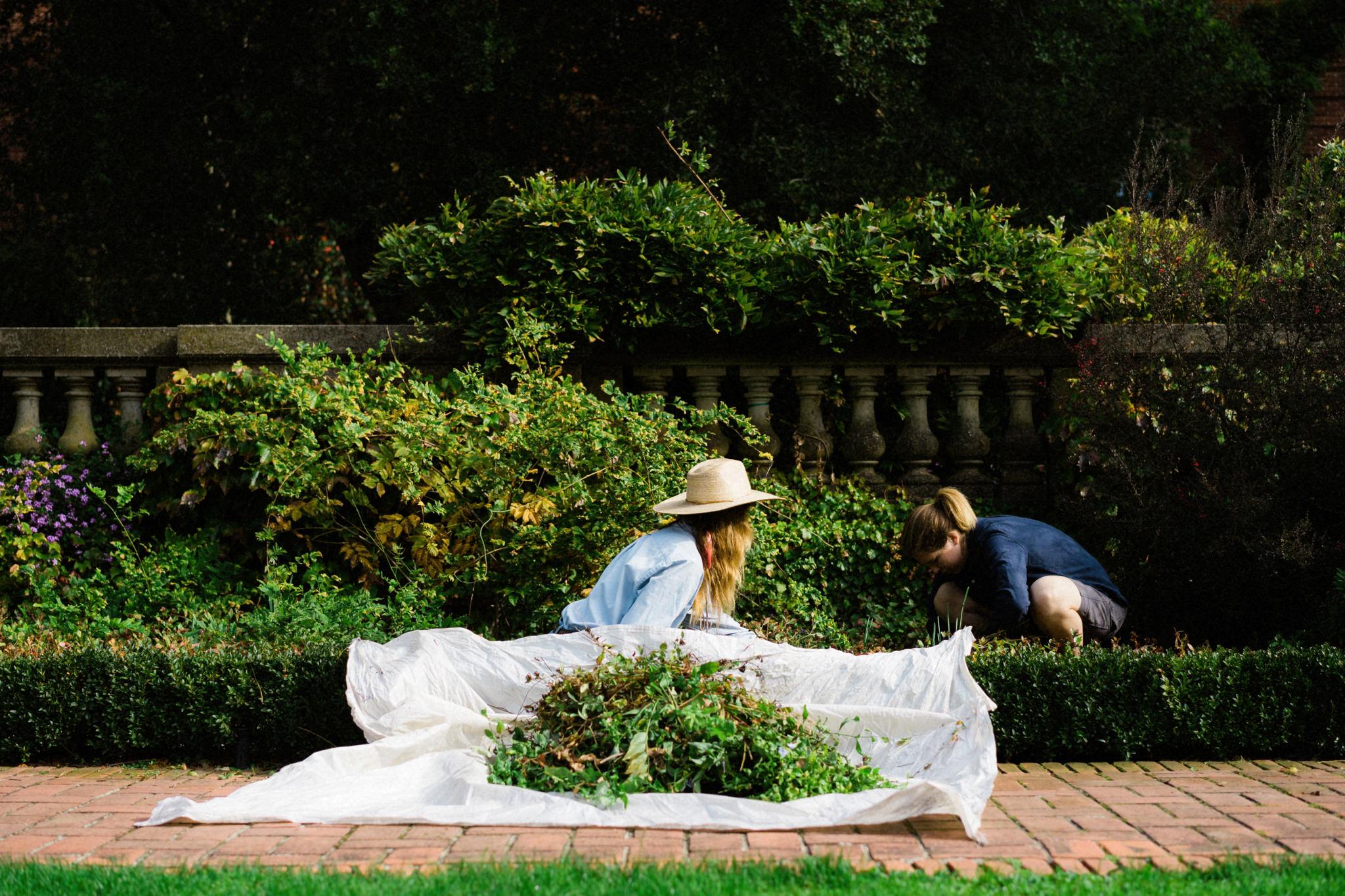 filoli garden photo