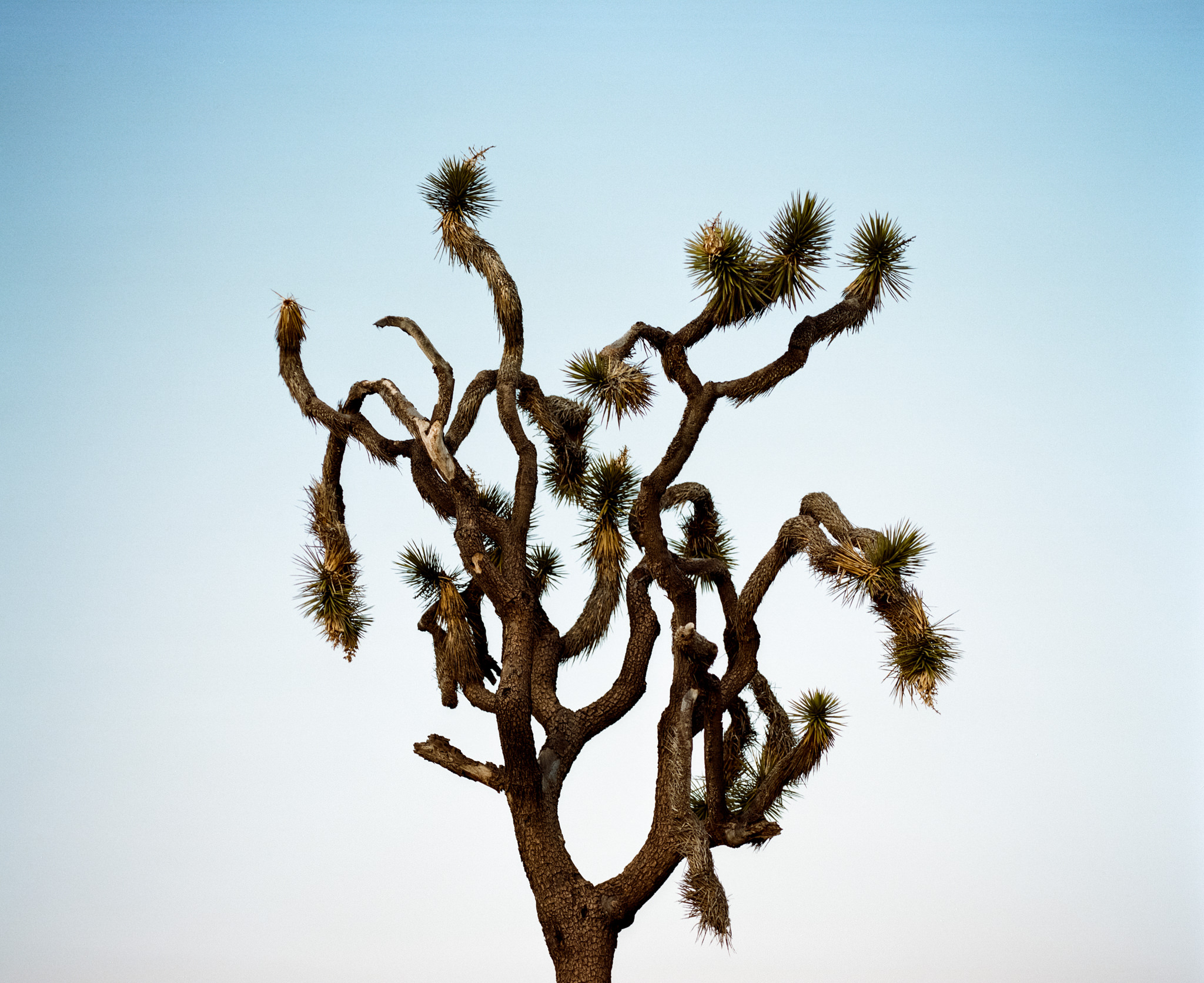 20180224-R1-Joshua-Tree-10.jpg