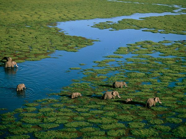 Elephants crossing a river in Amboseli National Reserve