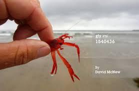 Tuna Crab Red Crab Image