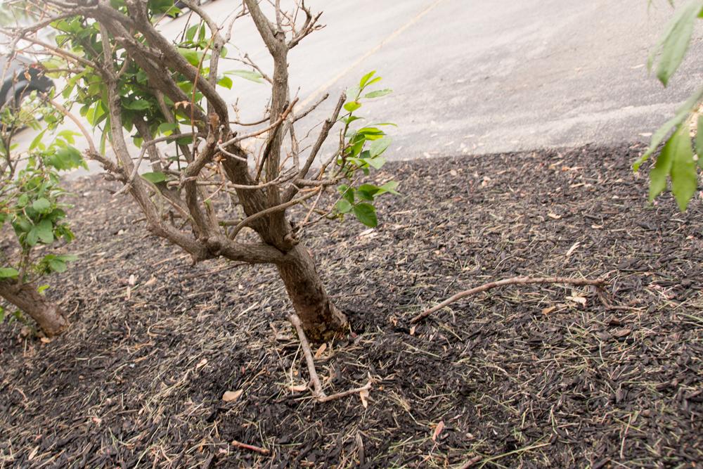 dutch-angle photograph of a lone bush.