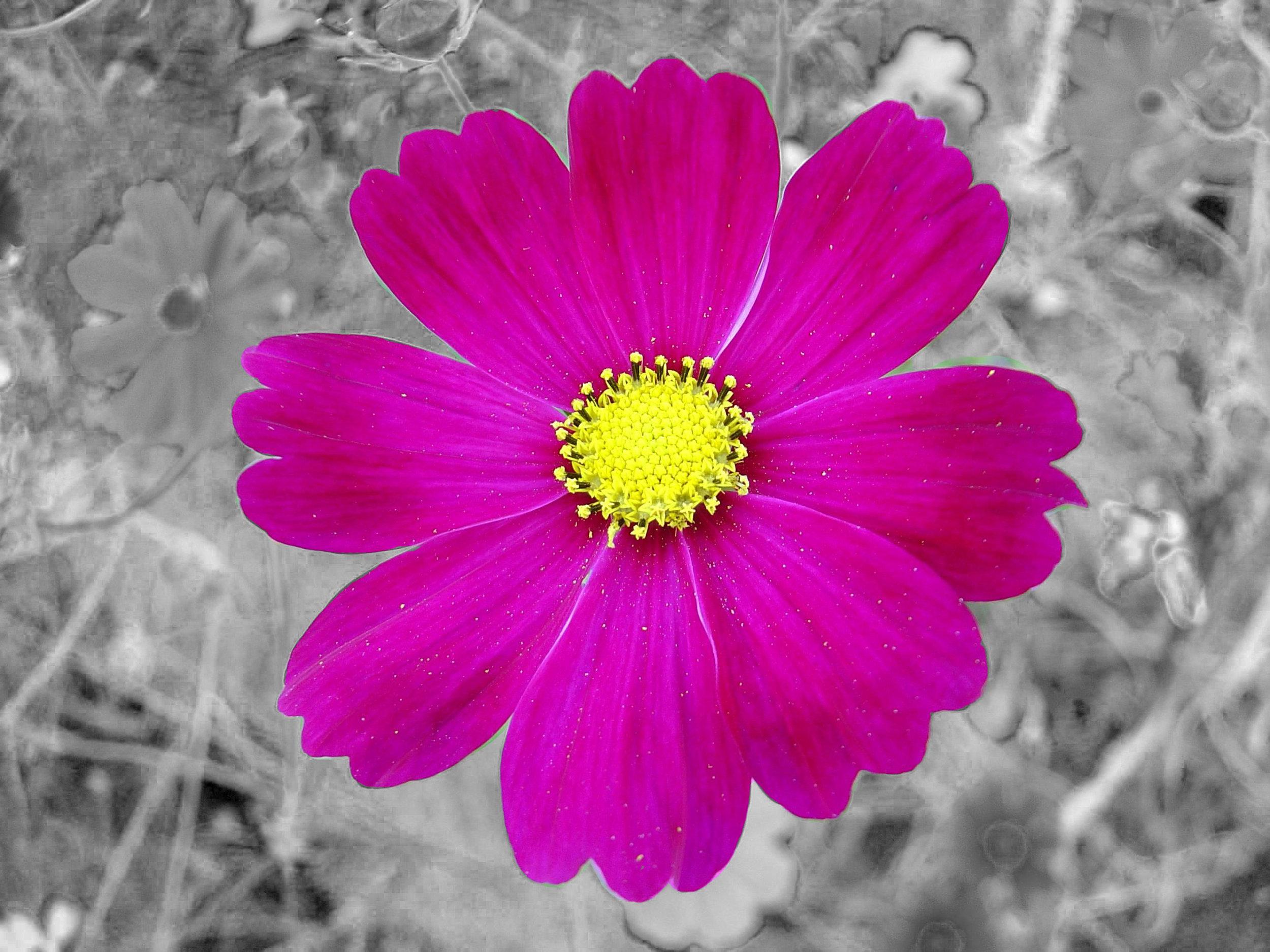Springer_Flower.jpg