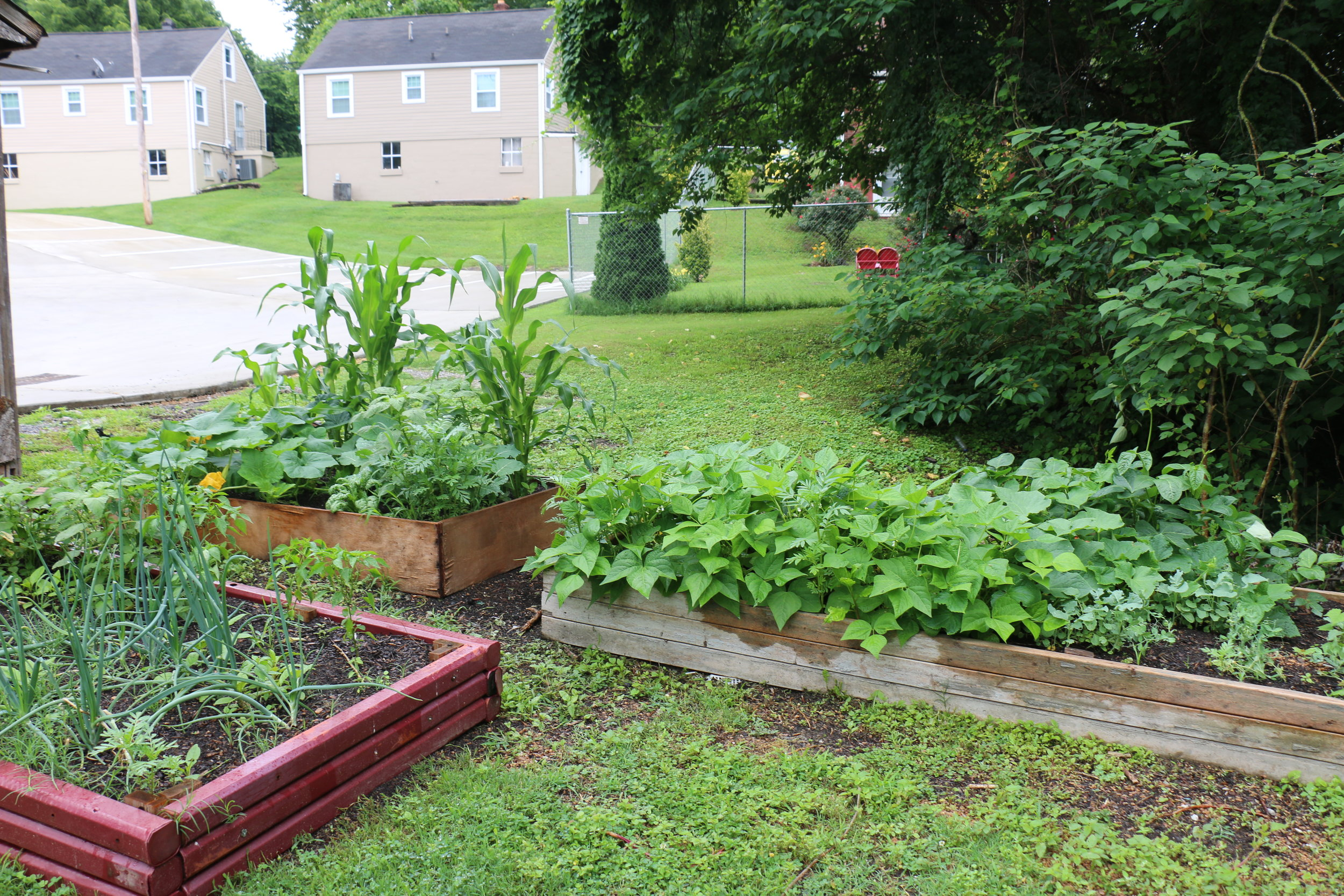 Food Pantry and Community Garden - The food pantry is for all in need. The community garden exists to help provide the pantry with fresh vegetables. It also allows opportunity for all ages to engage in the cultivation of creation.