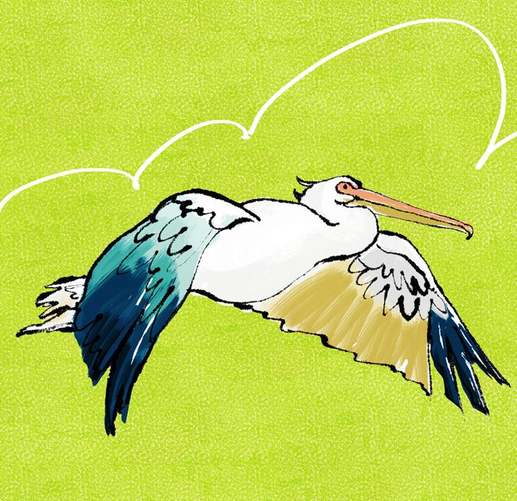 Flying-Pelican.jpg