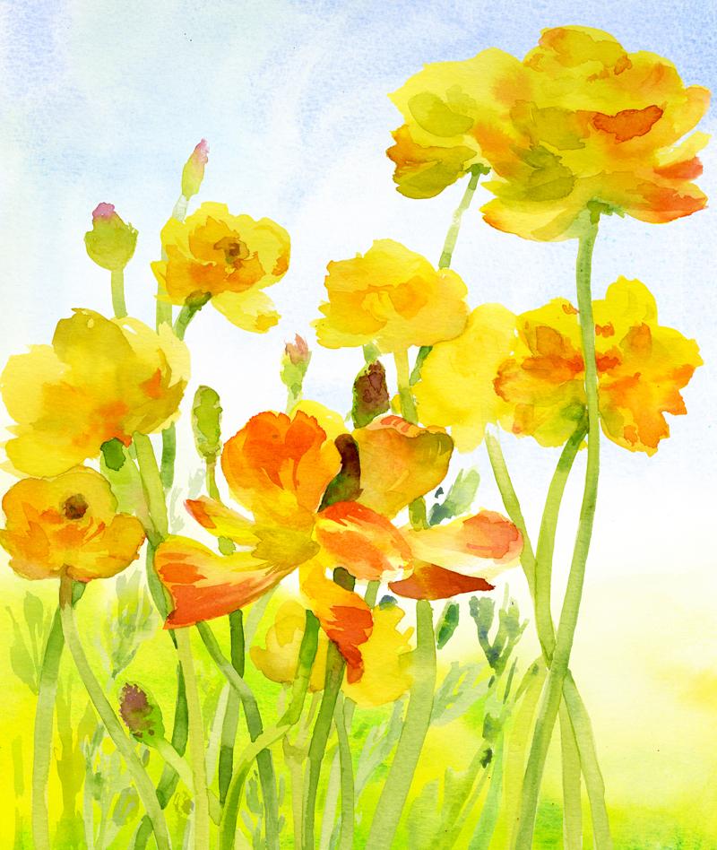Yellow-Renunculus.jpg