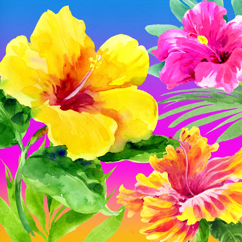 Another-Day-in-Paradise-Hibiscus-Flowers.jpg