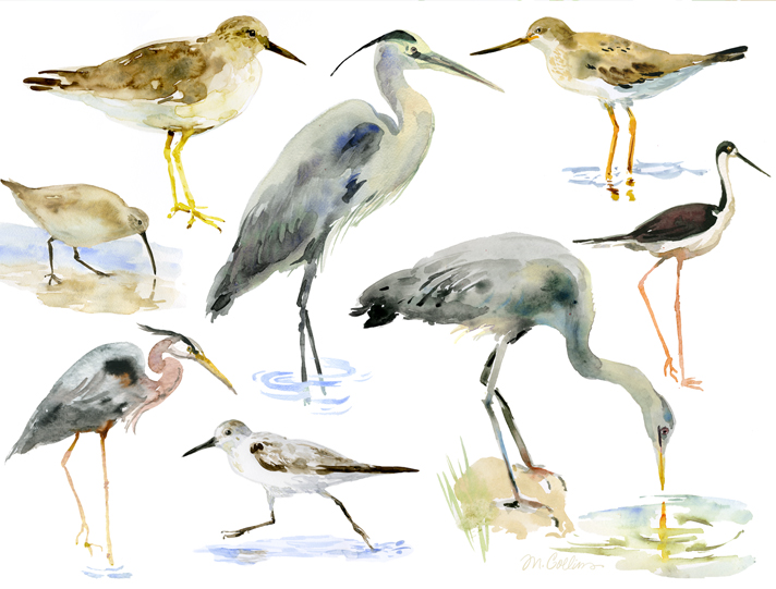 Shorebirds.jpg