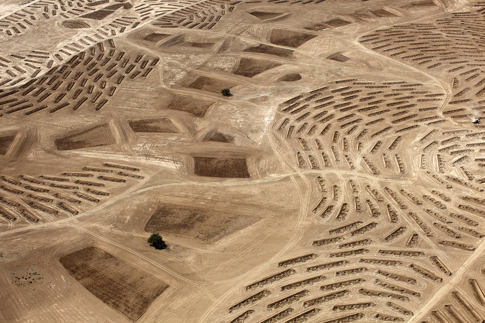 "Fazal Sheikh, From the ""Desert Bloom"" series, 2011"