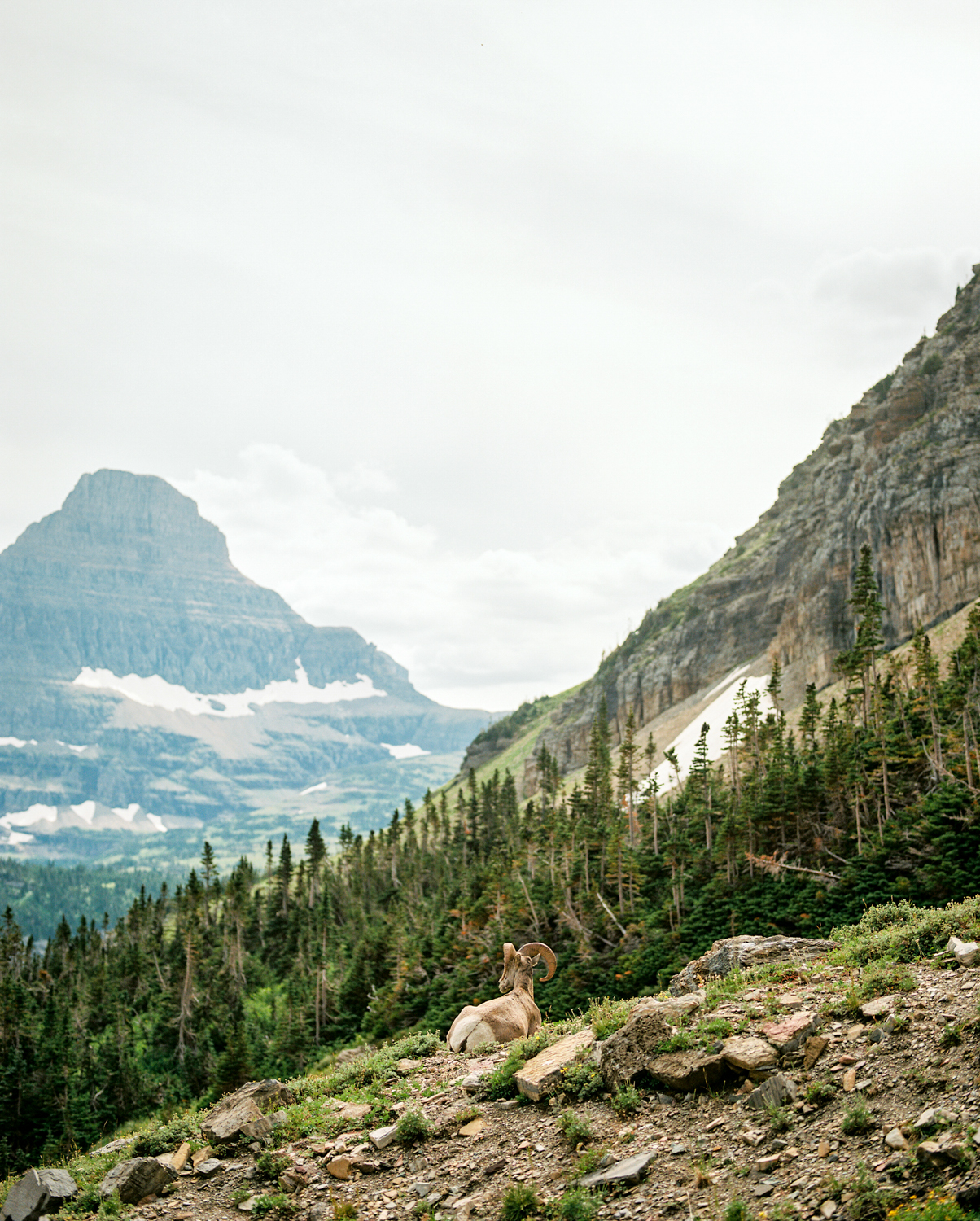 glacier-np-film (17 of 26).jpg