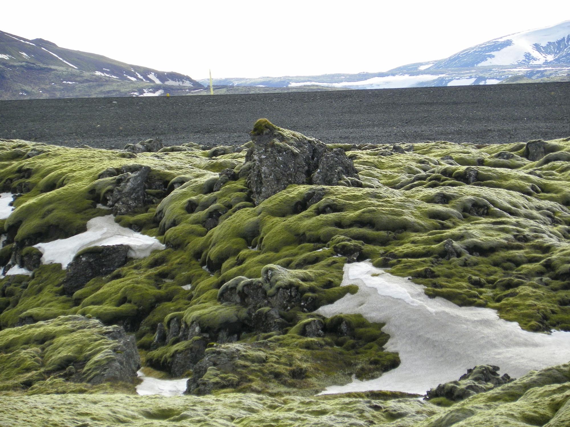 Iceland's lava fields