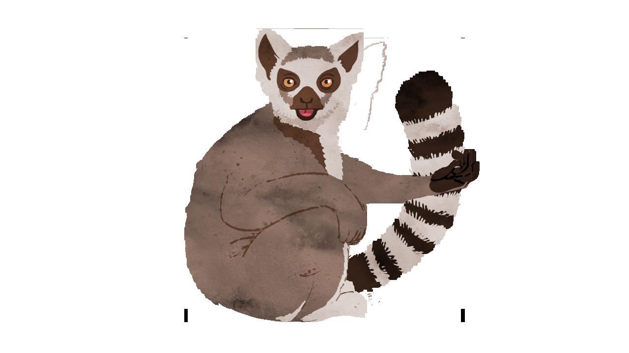 Animal 2: Lemur