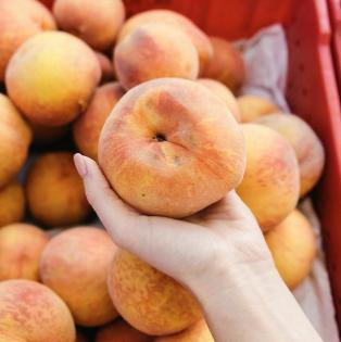 Social Media Tips for Farmers  - Peaches