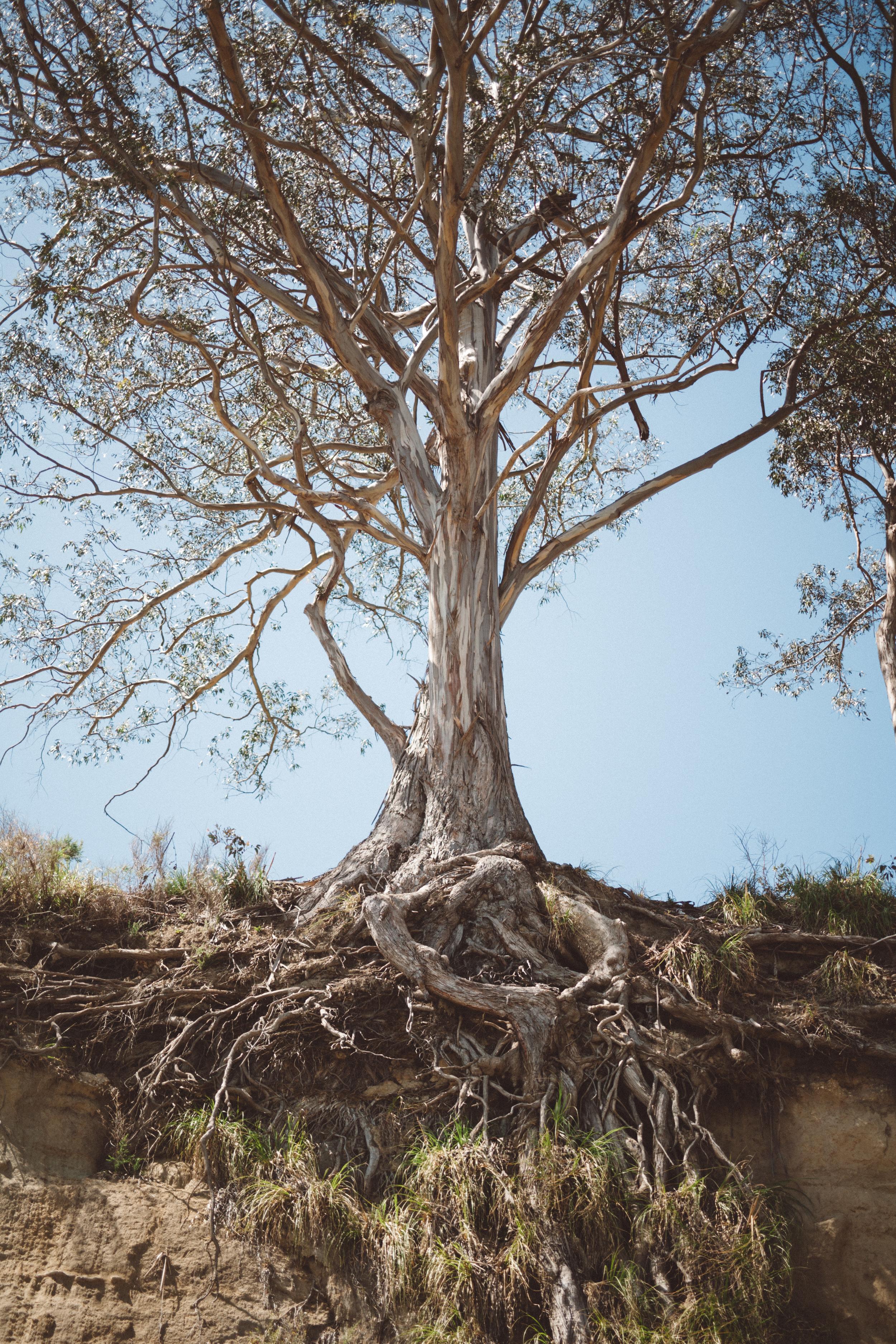 fav trees