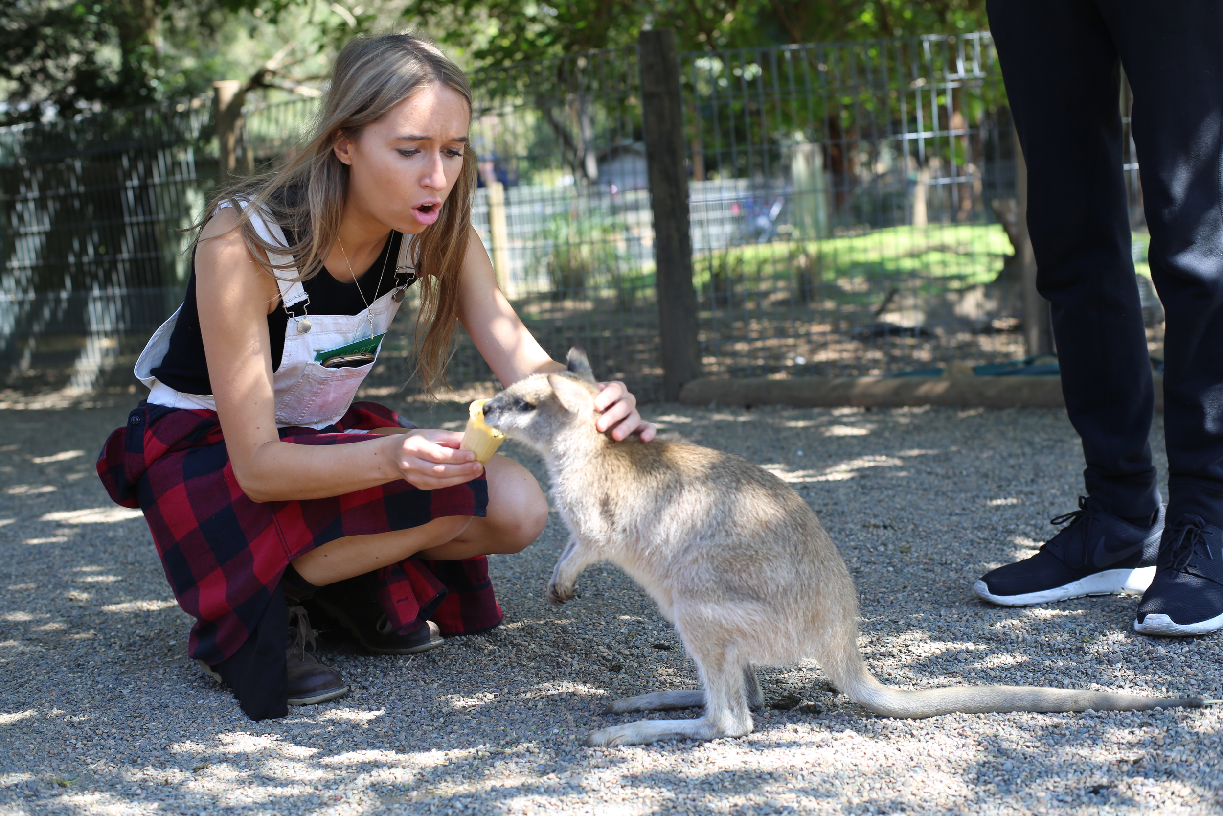 Jo feeding a Wallaby at Featherdale Wildlife Reserve