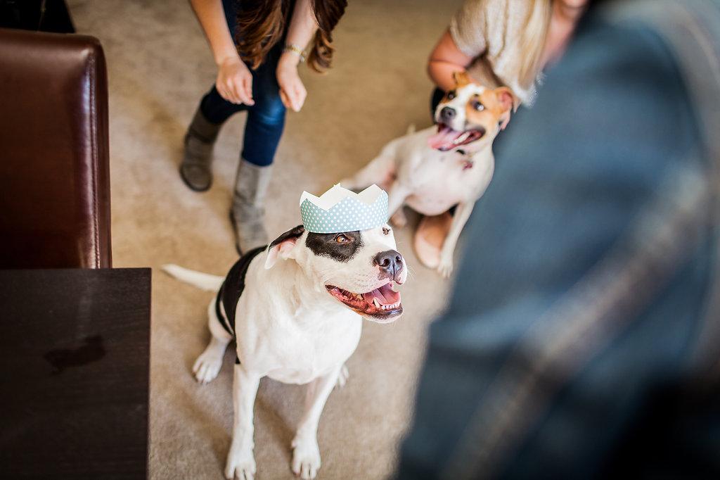 Puppy Birthday Party | Freckled Italian