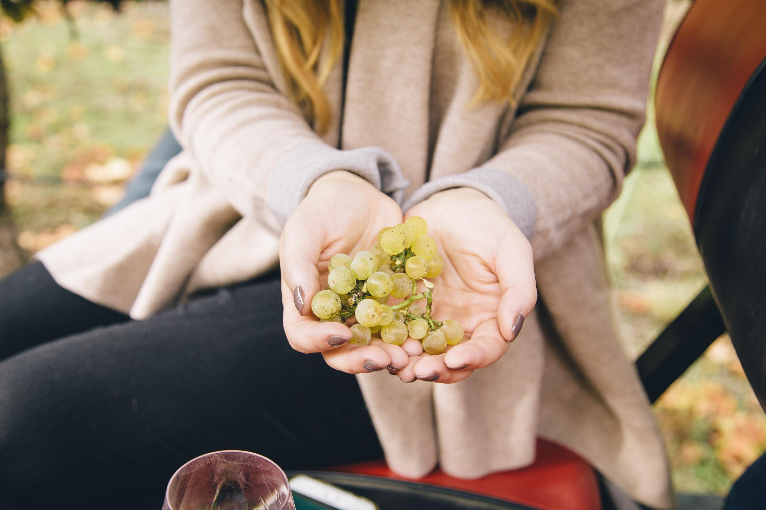 Chardonnay Grapes at La Crema | Freckled Italian