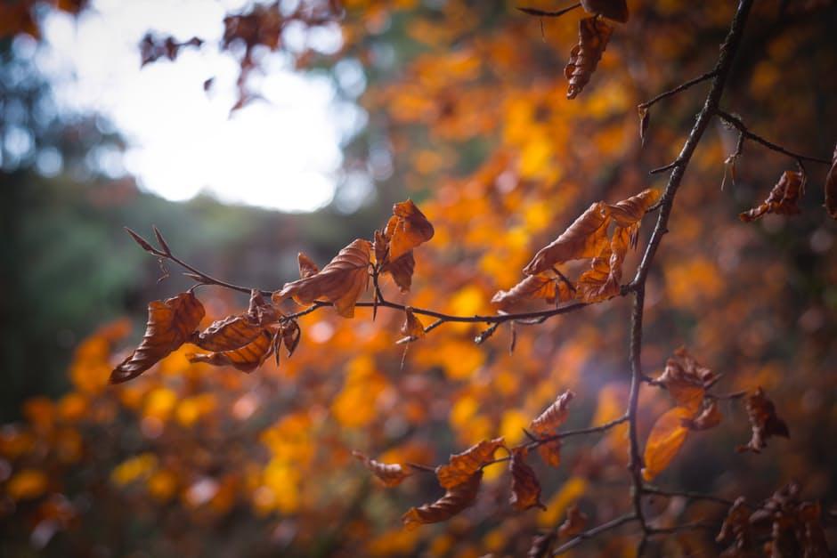 Autumn Fallin' | Freckled Italian