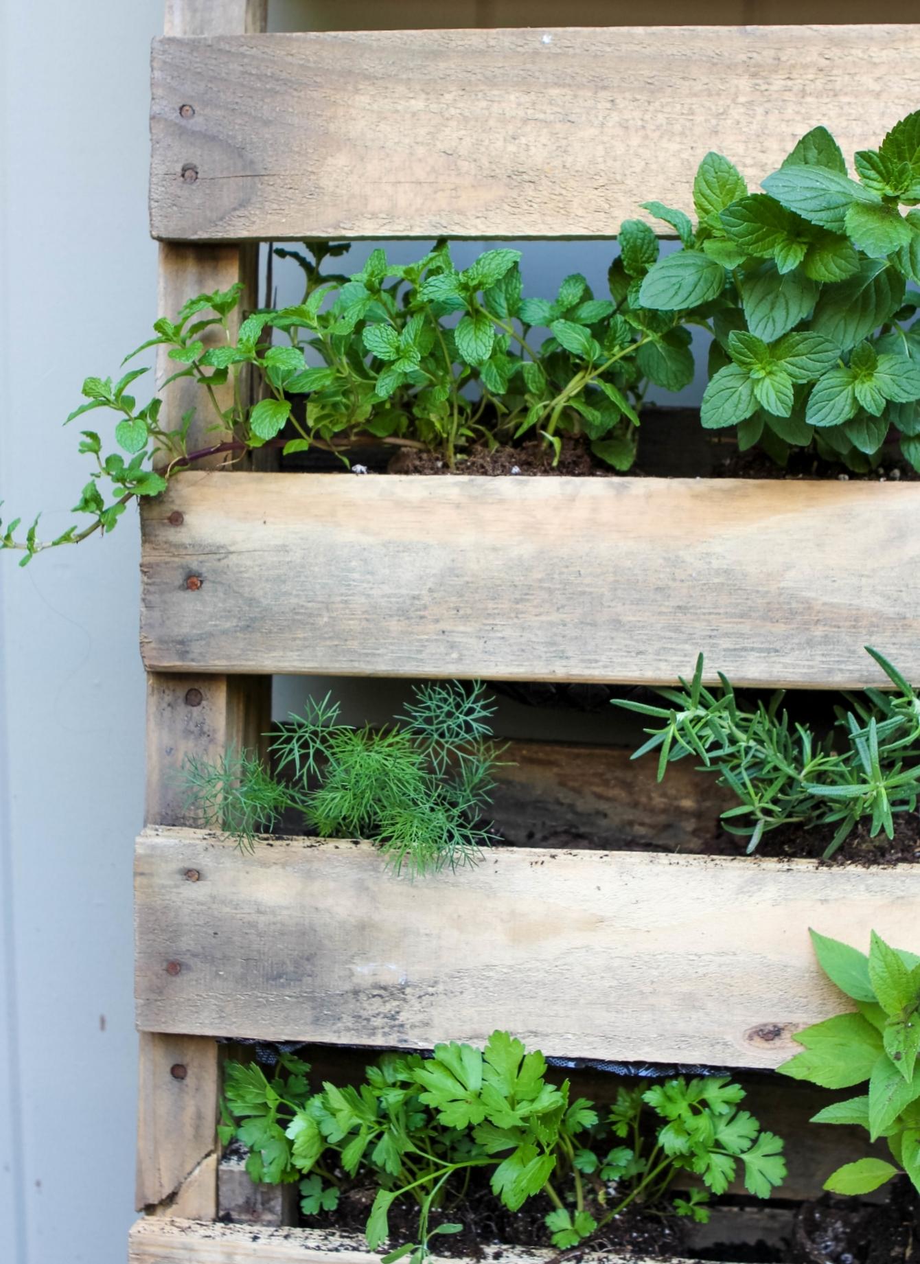 DIY Pallet Herb Garden   Freckled Italian