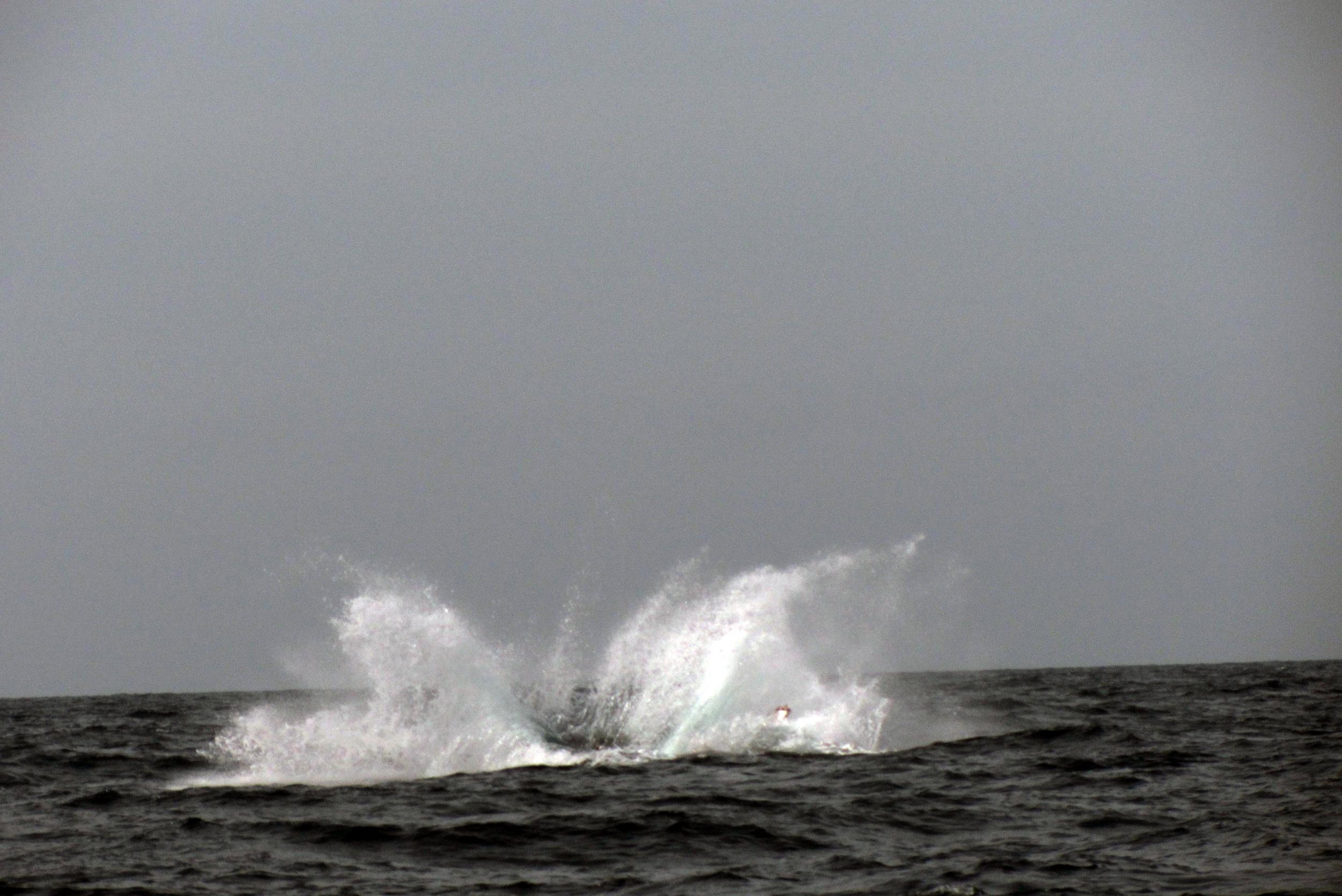 Humpback Whale San Diego