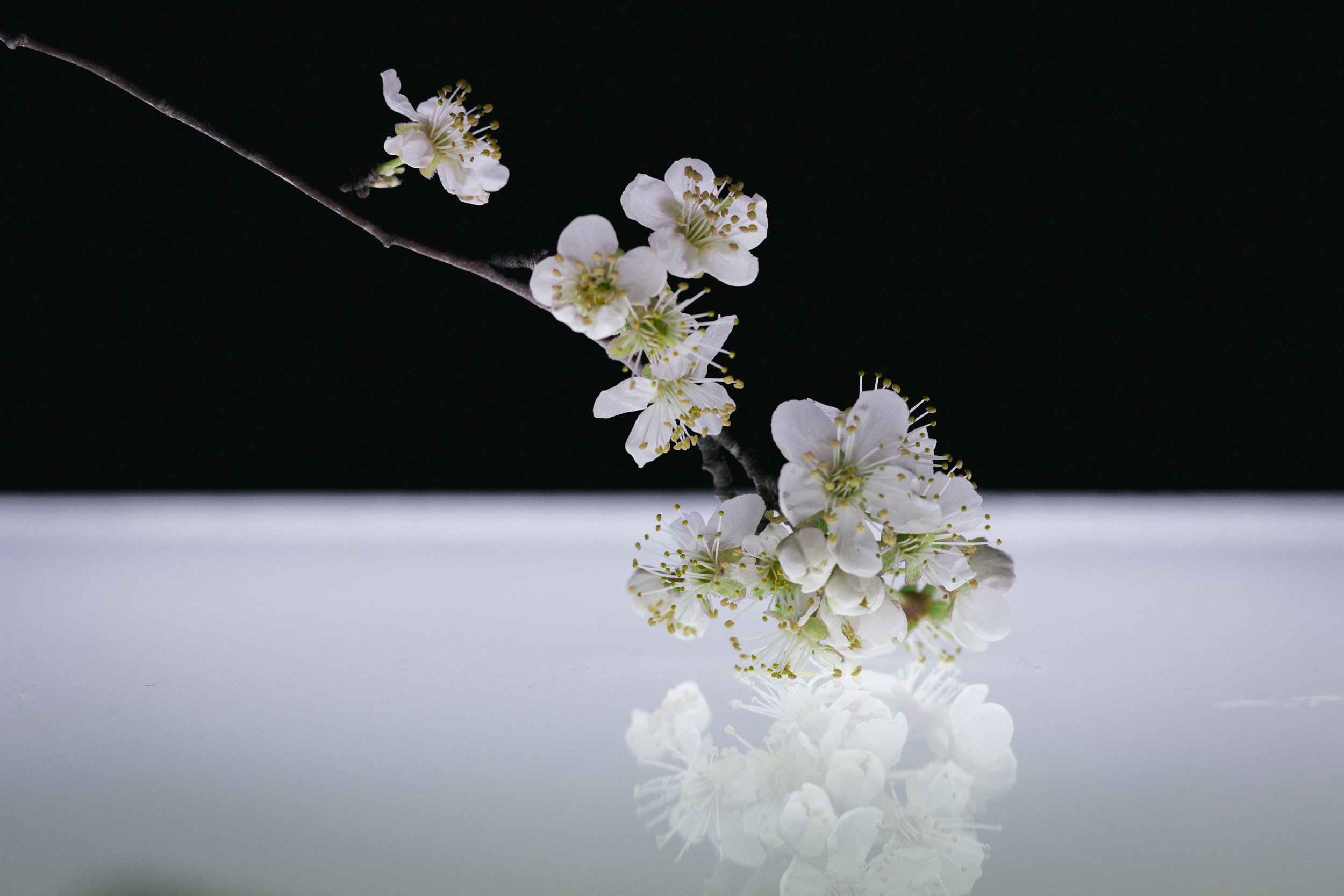Janelle.grace.com - Floral photography with lightbox-3.jpg