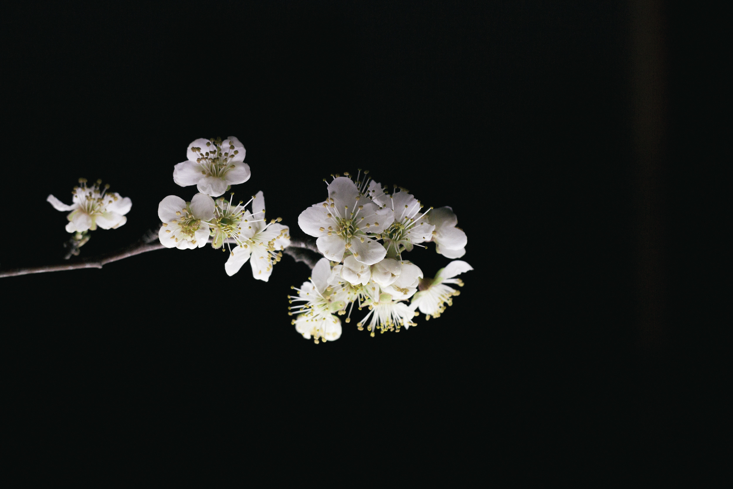 Janelle.grace.com - Floral photography with lightbox-1.jpg