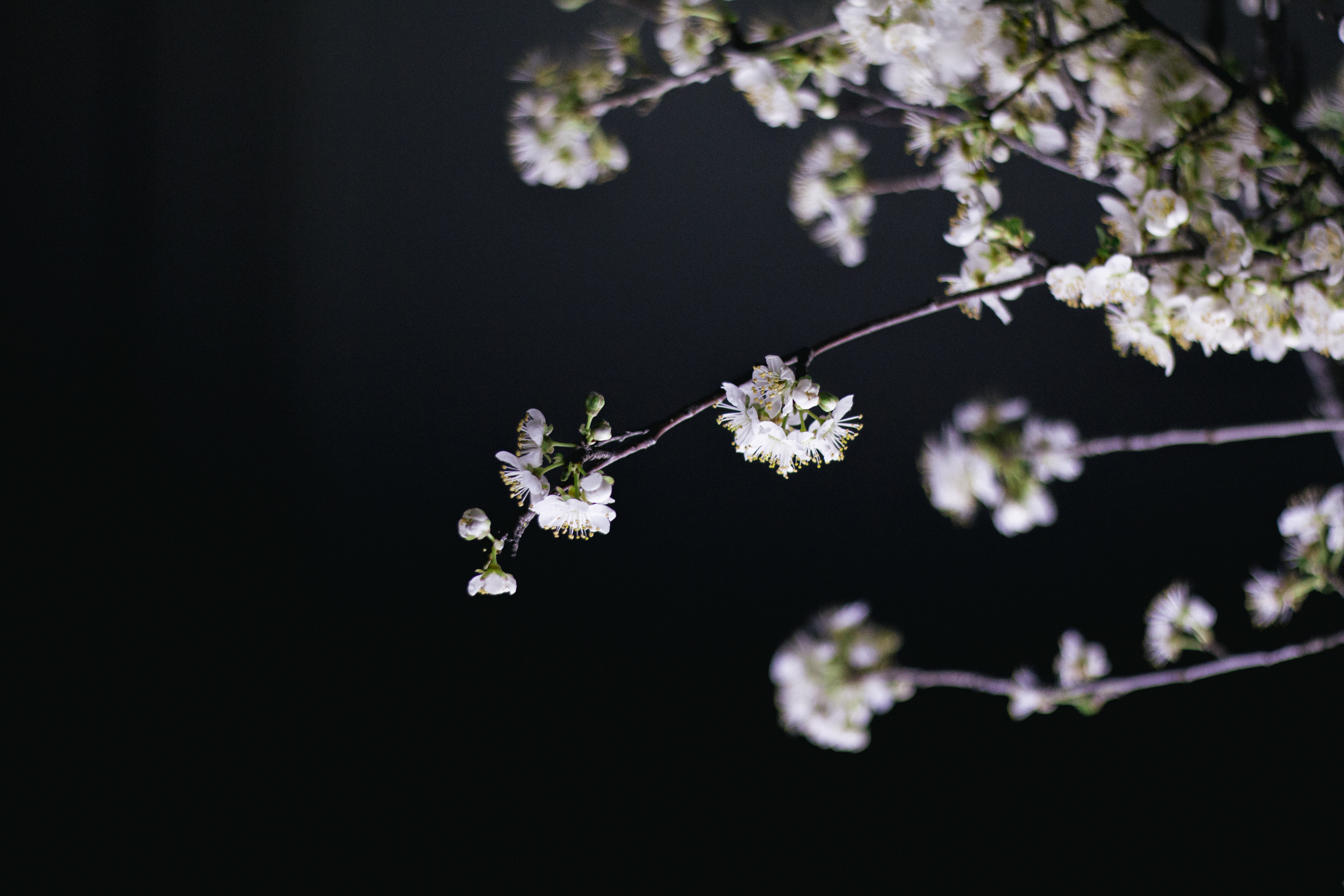Janelle.grace.com - Floral photography with lightbox-5.jpg