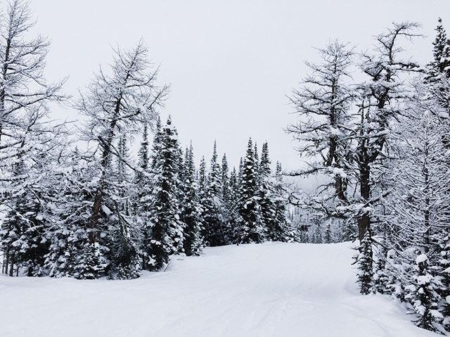 Couple days carving through this winter dreamland at Sunshine Village & Lake Louise last week, absolute magic.