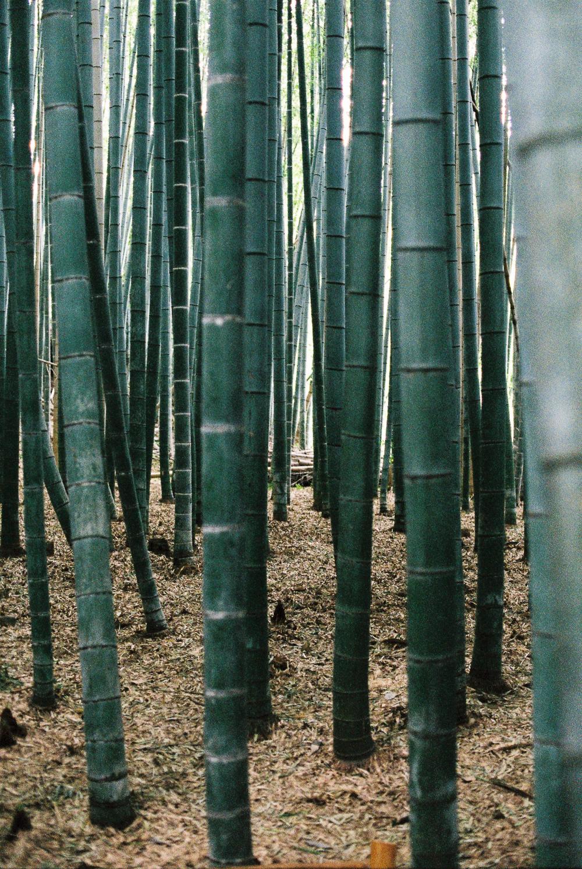 japanweb-30.jpg