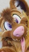 Brown dog face.jpg