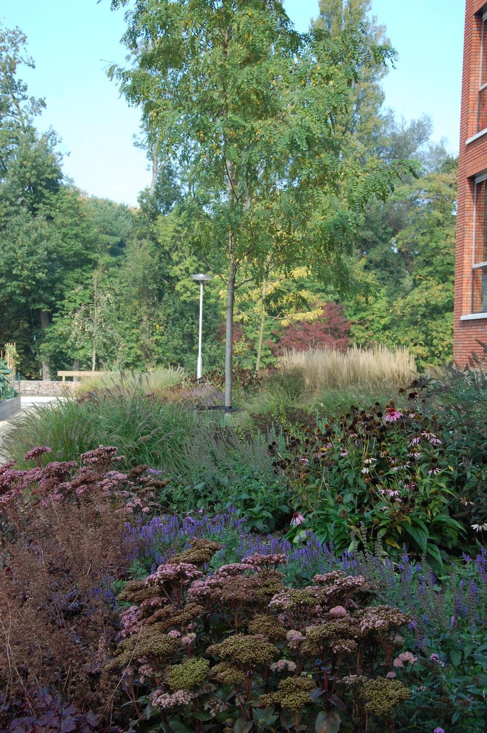 beplanting+door+GRASVELD+Tuin-+en+Landschapsarchitecten+te+leyhoeve.jpg