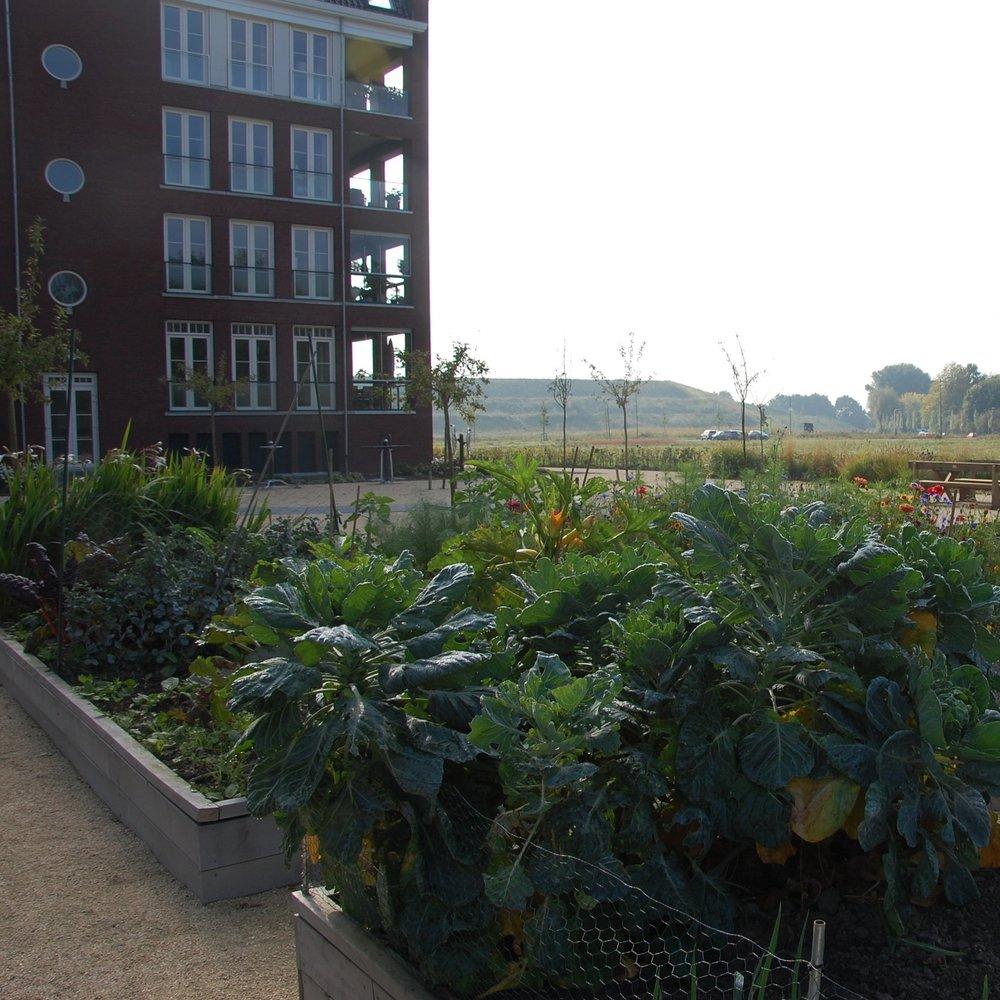 de+bewonersmoestuin+van+de+leyhoeve+GRASVELD+Tuin-+en+Landschapsarchitecten.jpg