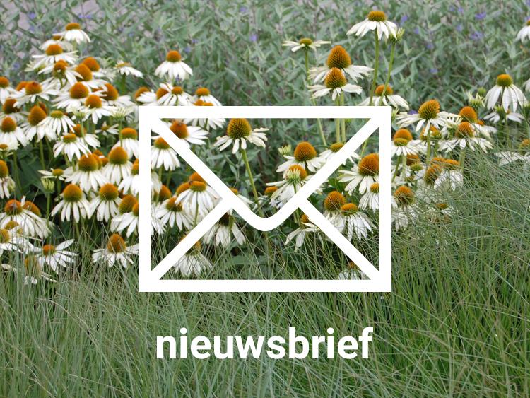 Grasveld_tuin_en_landschapsarchitecten_nieuwsbrief.jpg