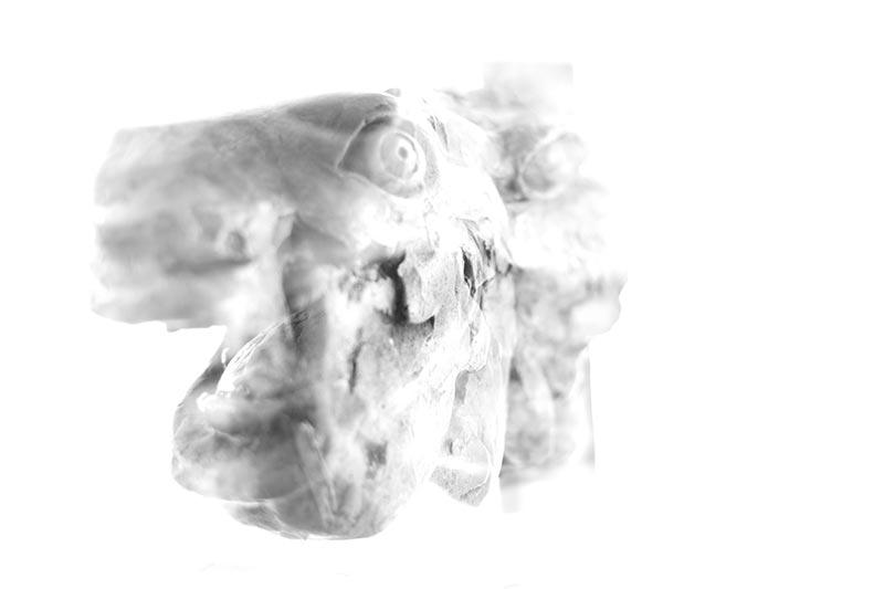 καλλιτεχνική ασπρόμαυρη φωτογραφία σαν ερπετό