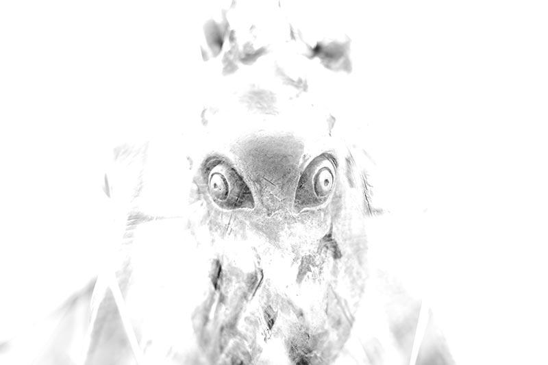 καλλιτεχνική ασπρόμαυρη φωτογραφία σαν χταπόδι
