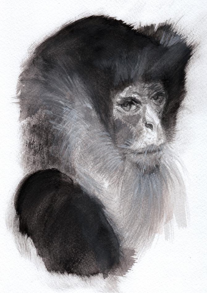 Monkey_web.jpg