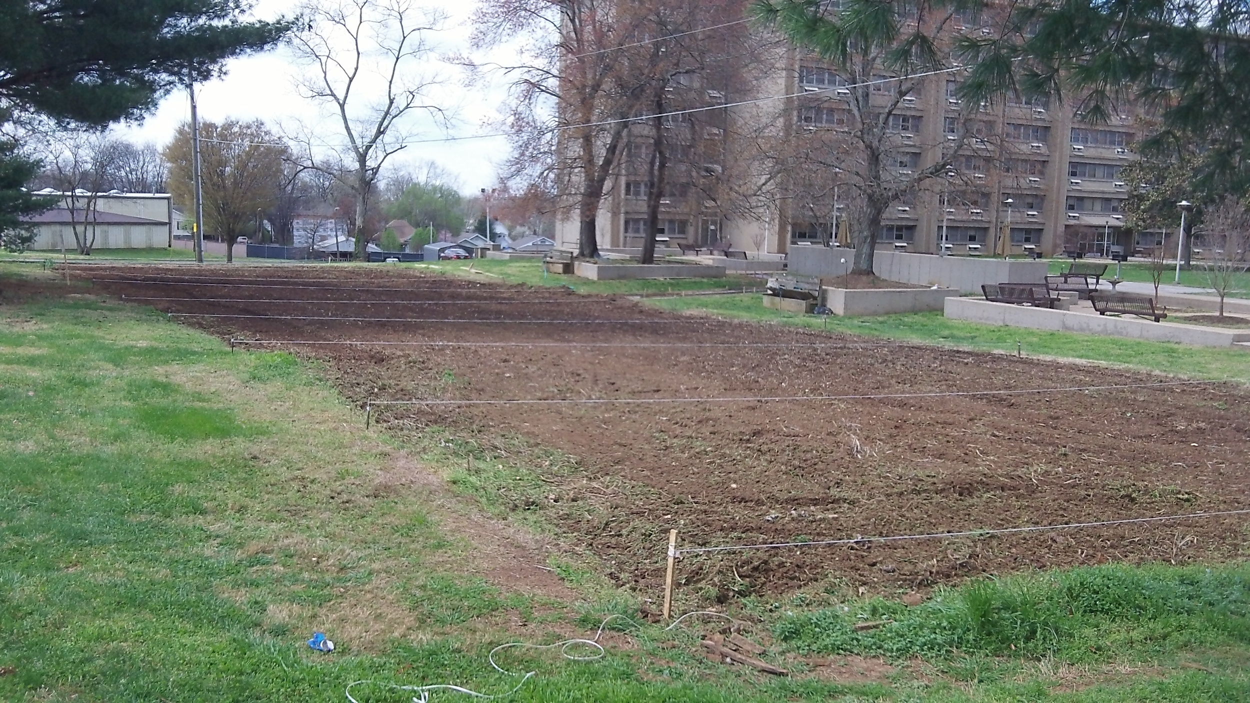 After   IMAGE DESCRIPTION:  A large cleared-out, tilled rectangle of soil in front of an apartment building ready for gardening!