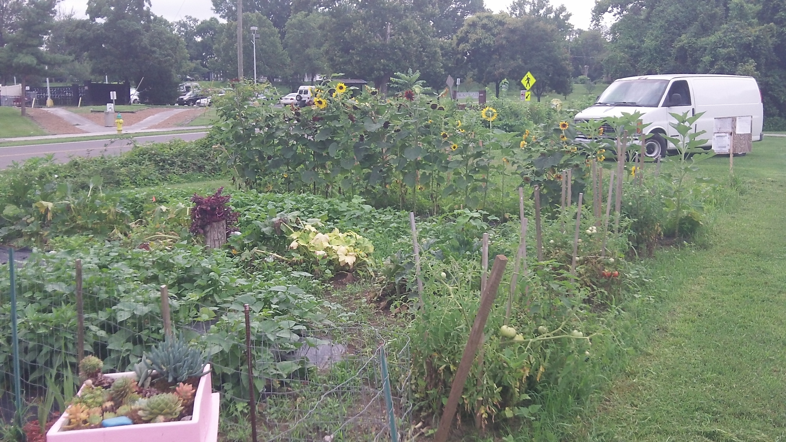 IMAGE DESCRIPTION:  A lush community garden filled with a variety of plants and vegetables.