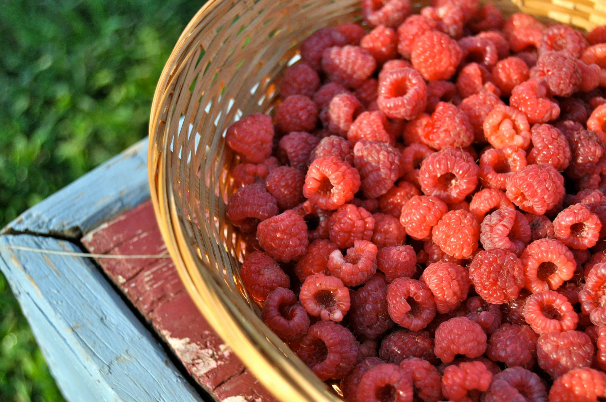 IMAGE DESCRIPTION:  A close-up of a basket of raspberries in the golden light of sunset.