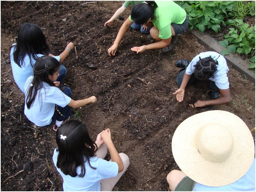 IMAGE DESCRIPTION:  An above shot of a group of children planting seeds.