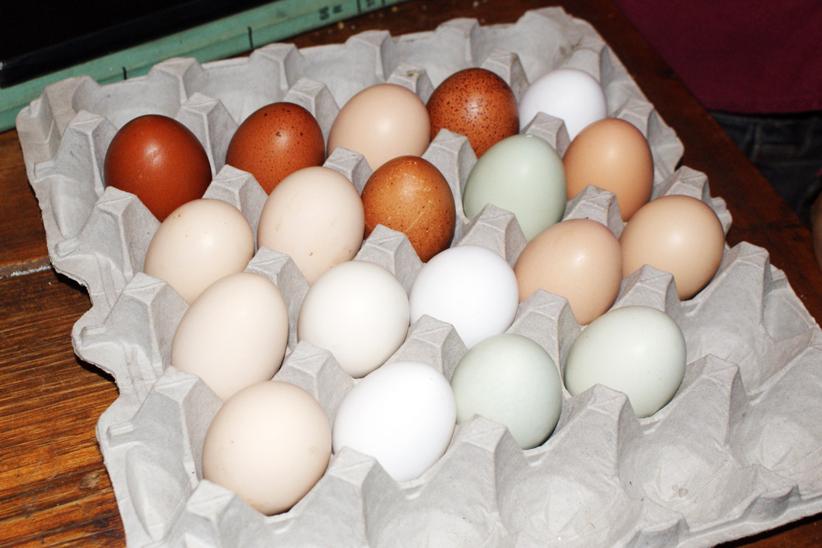 IMAGE DESCRIPTION:  An egg carton holding 19 brown, white, and blue eggs.