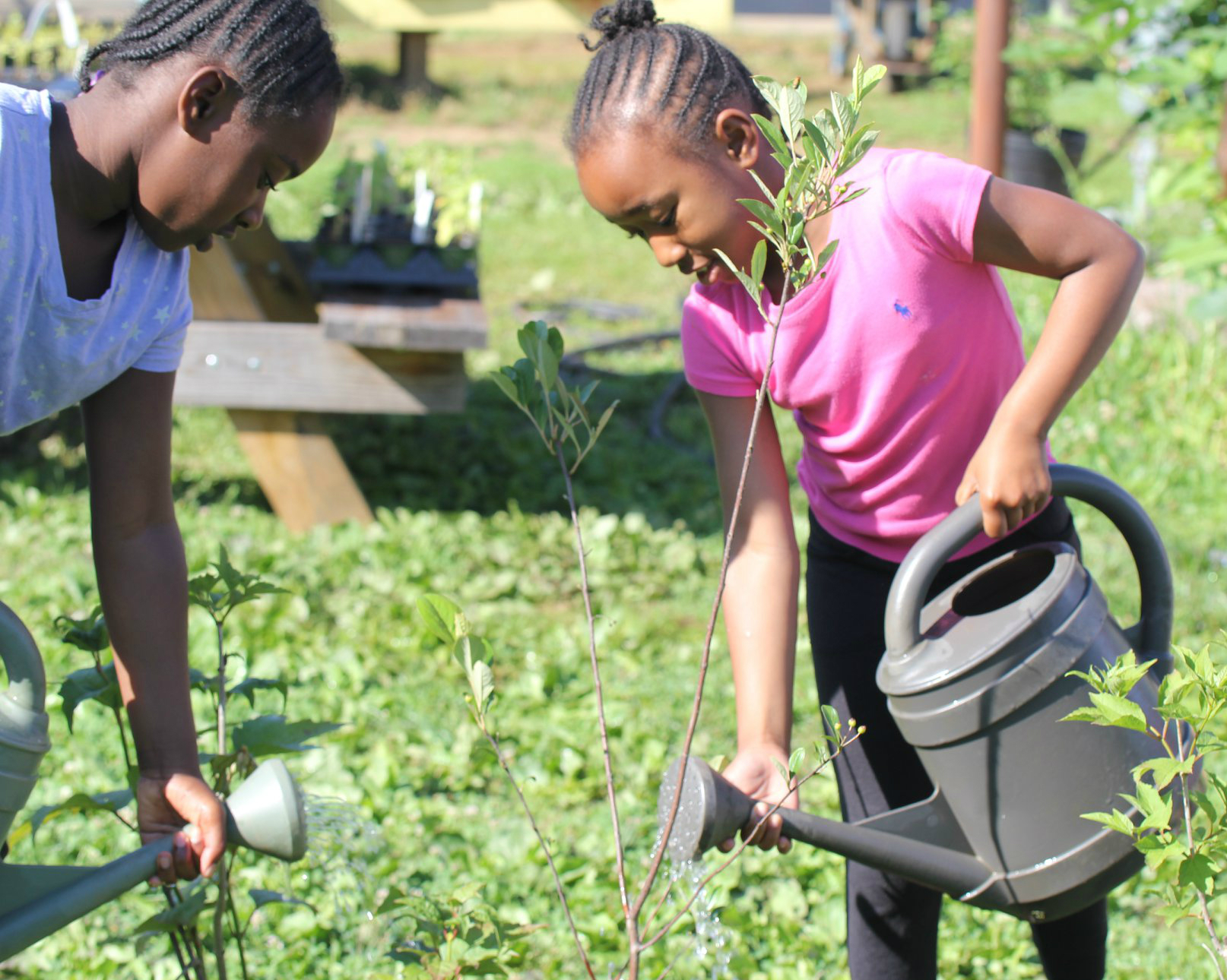 IMAGE DESCRIPTION:  Two children using watering cans on plants at Beardsley Farm.
