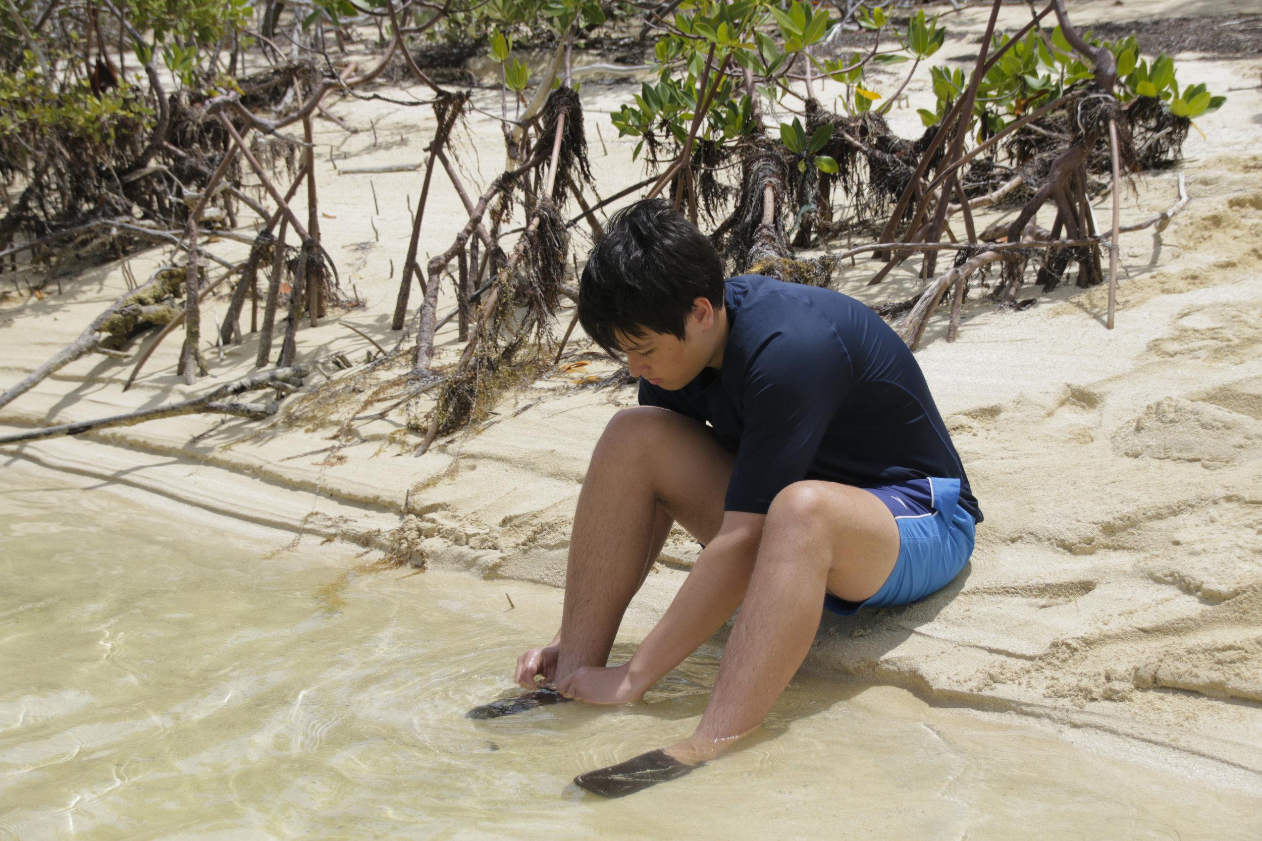 island school - shulman.jpg